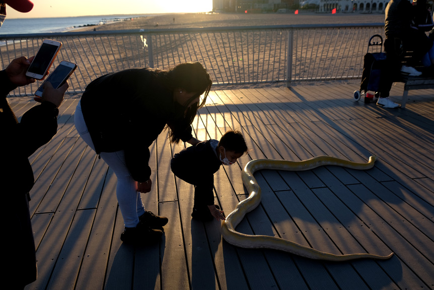 Bess Adler uses FUJIFILM X-S10 to document post-lockdown life in New York City. A family looks at a snake on a pier at Coney Island beach in Brooklyn, New York on September 19, 2020.